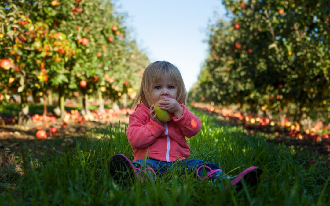 10 Tips To Set Up Toddlers For Good Eating
